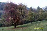 pastvina.jpg